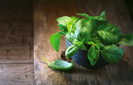Fresh basil leaves in a bowl on dark rustic wooden table Stock Photo