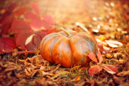 Halloween pumpkin. Thanksgiving day background. Orange pumpkin over bright autumnal nature background