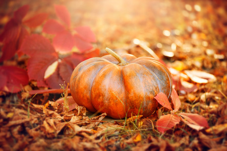 Halloween pumpkin. Thanksgiving day background. Orange pumpkin over bright autumnal nature background