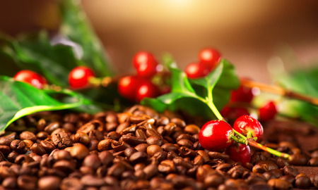 Coffee. Real coffee plant on roasted coffee background