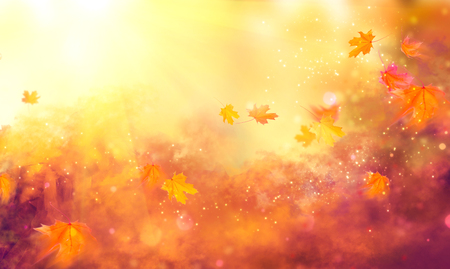 Spadek tła. Jesienią kolorowe liści i sun flare