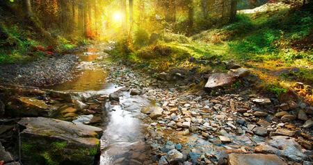 가 장면입니다. 산 봄, 숲 풍경 스톡 콘텐츠