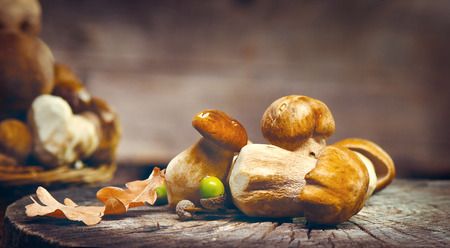 Cep mushrooms. Boletus isolated over wooden background Stock Photo