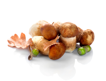 Cep mushrooms. Boletus isolated on white background
