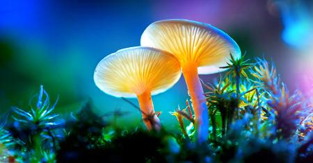 Paddestoel. Fantasie gloeiende paddestoelen in geheimzinnigheid donkere bosclose-up Stockfoto