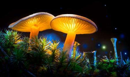 Champignon. Champignons rougeoyants de fantaisie dans le mystère de la forêt sombre closeup