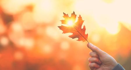 Herfst achtergrond. De herfstblad van de persoonsholding met zonstraal over vage de herfstachtergrond Stockfoto