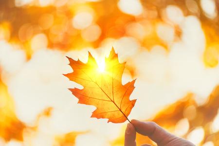 Toile de fond automne. Personne, tenue, automne, feuille, à, rayon soleil, sur, arrière-plan flou automne Banque d'images