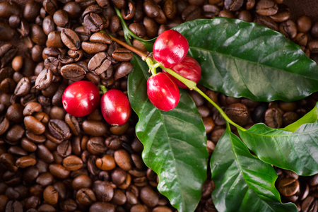 Coffee. Real coffee plant on roasted coffee background. Border art design