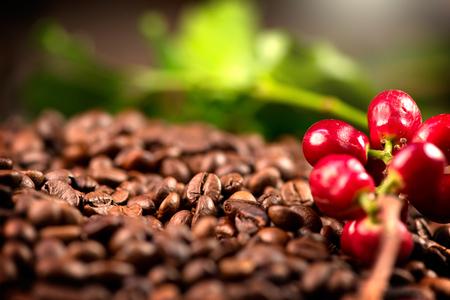 Koffie. Echte koffie plant op geroosterde koffie achtergrond. Border art design Stockfoto - 89193131