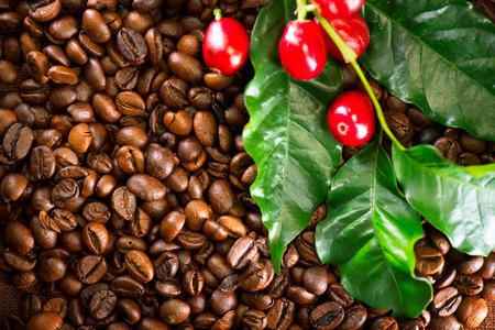 Coffee. Real coffee plant on roasted coffee background. Border art design Stock fotó - 89193146