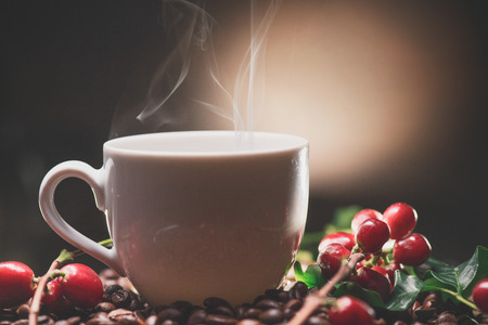 Coffee. Cup of steaming coffee with the ripe coffee berries