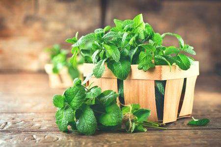 Mint. Bunch of fresh green organic mint leaf on wooden table closeup. Selective focus. Peppermint in a bowl Stock Photo