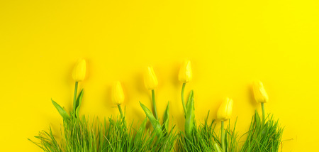 Easter background. Bright yellow spring blooming tulip flowers and fresh grass over yellow background. Easter backdrop Фото со стока