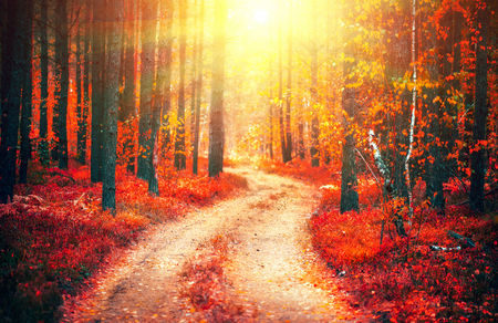 Autumn nature scene. Fantasy fall landscape. Beautiful autumnal park with pathway and old trees