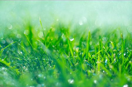 Gras met regendruppels. Gazon besproeien. Regen. Wazig groen gras achtergrond met water druppels close-up. Natuur. Milieu concept Stockfoto