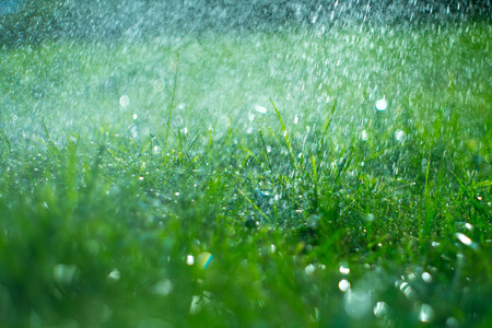 Grass with rain drops. Watering lawn. Rain. Blurred green grass background with water drops closeup. Nature. Environment concept