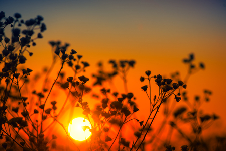 Beautiful meadow with wild flowers over sunset sky. Field of camomile medical flower, Beauty nature background with sun flare Stock Photo