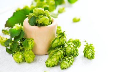 Hop. Whole hops in wooden bowl on white table. Brewery. Beer production ingredients. Fresh picked hop cones closeup Stock Photo