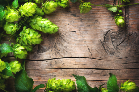 Hop twig over old wooden cracked table background. Beer production ingredient. Brewery concept Imagens