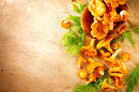Raw wild chanterelle mushrooms on old rustic table background. Organic fresh chanterelles background. Border design Foto de archivo