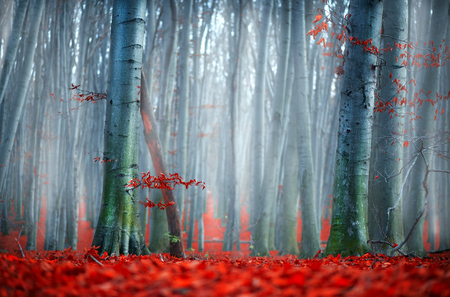 Fall. Autumn landscape. Beautiful autumnal park with bright red leaves and old dark trees. Beauty nature scene