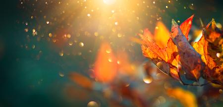 Otoño de hojas brillantes de colores columpiándose en un árbol en el parque otoñal. Fondo de colores otoñales, telón de fondo de otoño Foto de archivo