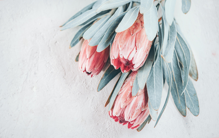 Protea buds closeup. Bunch of pink King Protea flowers over grey background. Valentine's Day bouquet 스톡 콘텐츠