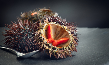 Sea Urchin closeup. Fresh sea urchins delicatessen food. Traditional Mediterranean food Imagens - 119604628