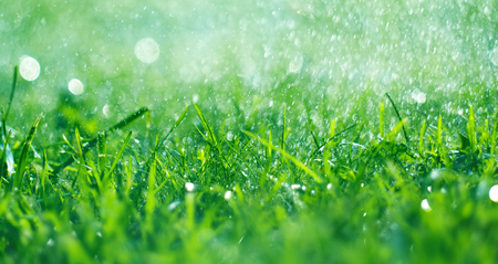 Grass with rain drops. Watering lawn. Fresh green spring grass with dew drops closeup.