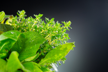 Herbs. Bunch of fresh green organic aromatic herb leaves closeup. Mint, Peppermint, Rosemary, Thyme, Sage Stock fotó