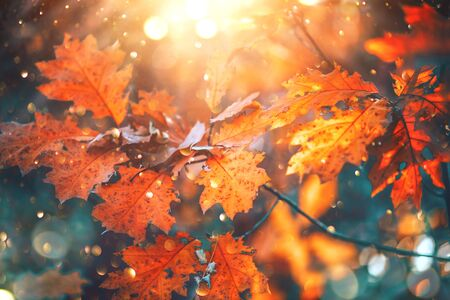 Autumn colorful bright leaves swinging on an oak tree in autumnal park. Fall background. Beautiful nature scene Standard-Bild - 126609018
