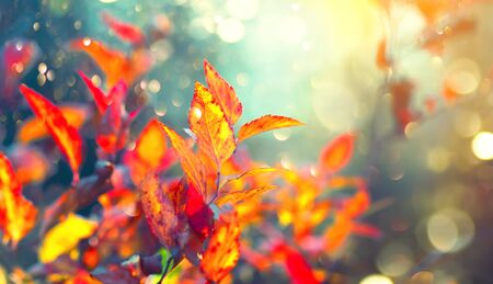 Autumn colorful bright leaves swinging in a tree in autumnal park. Fall colorful background. Beautiful nature scene Stok Fotoğraf