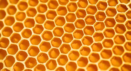 Honeycomb. Honey comb full of fresh organic sweet honey, yellow background, cells. Healthy food concept, diet, dieting. Rotated background, backdrop.