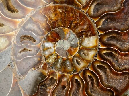 Nautilus shell section, Ammonite fossil shell art backdrop. Ancient macro abstract texture Background. Polished ammonite fossil shell with mineral crystals. Close-up