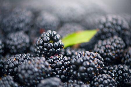 Blackberry closeup background. Fresh Ripe organic black berries with green leaf backdrop close-up. Bio Blackberries, background. Macro shot. Market. Vegan food.