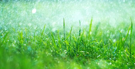 Grass with rain drops. Watering lawn. Rain. Blurred Grass Background With Water Drops closeup. Landscaping. Nature. Garden, gardening backdrop. Environment concept Zdjęcie Seryjne