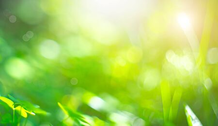 Beautiful Nature Blurred Background. Green Bokeh. Summer or spring abstract backdrop with fresh green leaves and sun flares Zdjęcie Seryjne