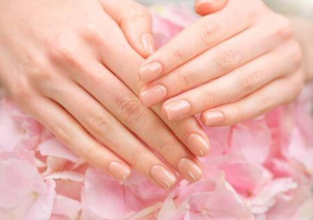 Manicure, beauty nails. Beautiful Woman's hands, Spa and Manicure concept. Female hands with beautiful natural pink french elegant manicure. Soft skin, skincare concept. Salon. Treatment. Standard-Bild