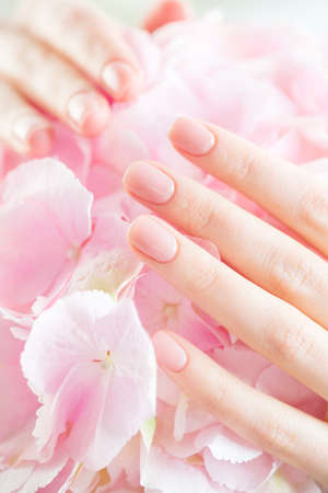 Beautiful Healthy nails. Manicure, Beauty Woman's hands, Spa. Female hands with beautiful natural pink french elegant manicure on pink hydrangea flower. Soft skin, skincare. Salon, treatment.