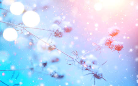 Winter nature background. Christmas holiday backdrop, Frozen tree branch closeup. Abstract Art design. Shallow DOF, soft focus Standard-Bild