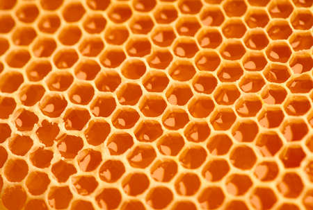 Honeycomb. Honey comb full of fresh organic sweet honey, yellow background, cells. Healthy food concept, diet, dieting. Rotated background, backdrop
