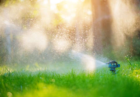 Sprinkler head watering green grass lawn. Gardening concept. Smart garden activated with full automatic sprinkler irrigation system working in a green park.