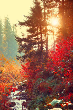 Autumn landscape background. Beautiful Vertical picture of a colorful fall in mountains with river, trees with red and orange leaves. Pine trees silhouette in sunlight. Beautiful nature backdrop