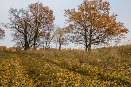 Autumn landscape in a cloudy evening is full of melancholy. Lonely trees with withering foliage amidst the desolate expanses. Stock Photo