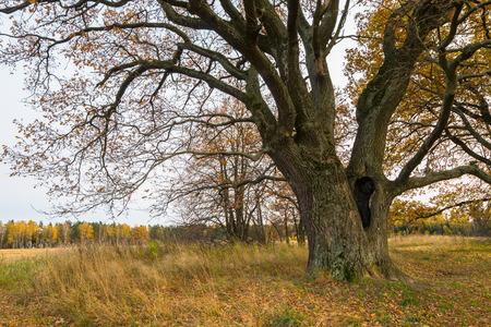 Melancholic autumn landscape is full of sad harmony.