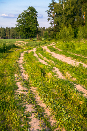 Summer countryside landscape. Deserted rural dirt road along the forest, Moscow suburbs, Russia. Stockfoto