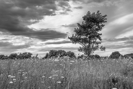 Monochrome image. Gloomy sky over the flowered Bogolyubovo meadow, Vladimir region, Russia.