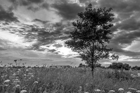 Monochrome image. Gloomy sky over the flowered Bogolyubovo meadow, Vladimir region, Russia.