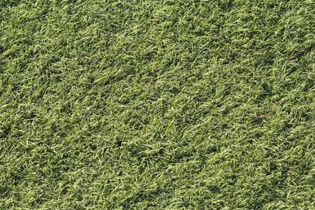 topdown: Artificial green grass shot from above, top-down.